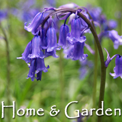 Trees, Shrubs, Wildflower Seeds & Bulbs, Gardening Gifts & Sundries