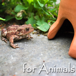 Wild Animal Homes, Feeders, Food & Gifts