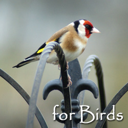 Bird Feeders, Nest Boxes and Gifts
