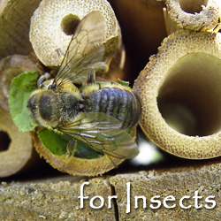 Beneficial Insect Homes, Containers, Magnifiers and Related Gifts