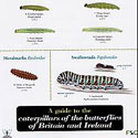 Laminated Guide to Caterpillars