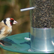 Bird Feeders & Baths