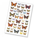 Butterflies Identification Postcard