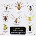 Laminated Guide House and Garden Spiders