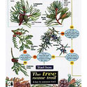 Laminated Guide The Tree Name Trail