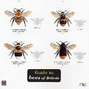 Laminated Guide to Bees