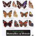 Laminated Guide to Butterflies