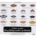 Laminated Guide to Day-flying moths of Britain