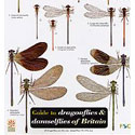 Laminated Guide to Dragonflies & Damselflies