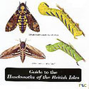 Laminated Guide to Hawkmoths