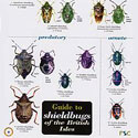 Laminated Guide to Shieldbugs