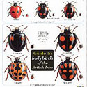 Laminated Ladybird Guide