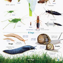 Laminated Guide to Garden Bugs and Beasties