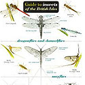 Laminated Insects Guide