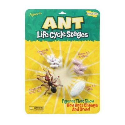 Ant Lifecycle Figures