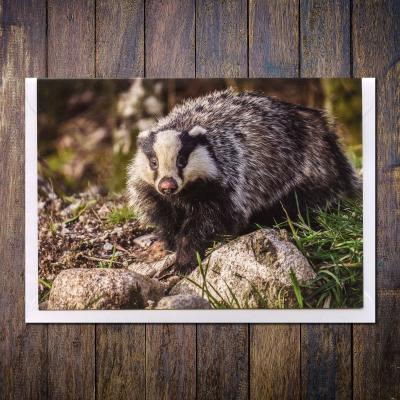 Badger Blank Photographic Greetings Card A6
