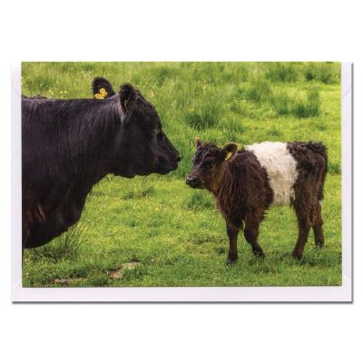 Belted Galloway Beltie Cow and Calf Blank Photographic Greetings Card A6
