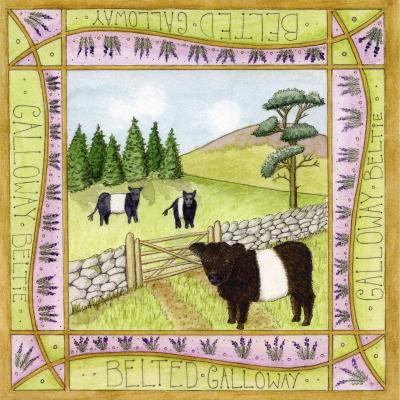 Belted Galloway Cow Blank Greetings Card