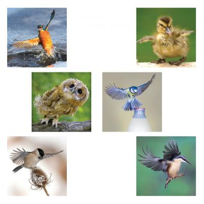 Pack of Six Bird Notecards Set 2