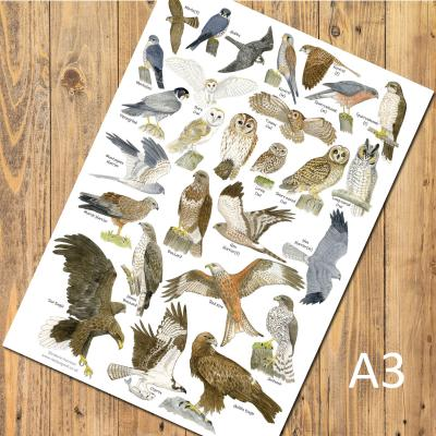 British Birds of Prey and Owls A3 Identification Poster