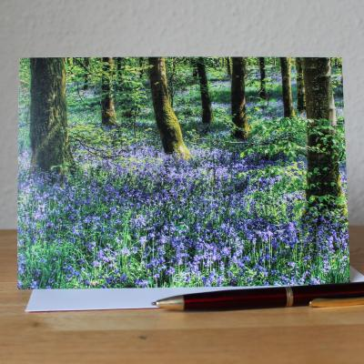 Bluebell Woods Blank Photographic Greetings Card