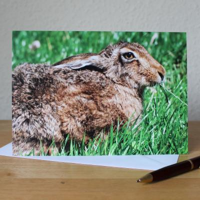 Brown Hare Blank Photographic Greetings Card