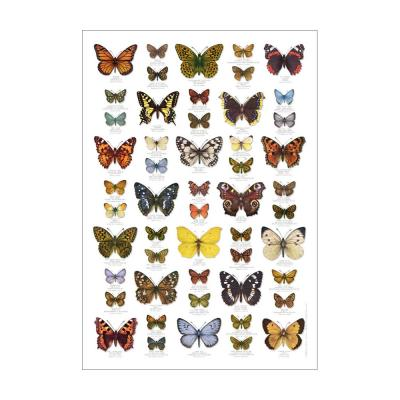 British Butterflies Identification Poster
