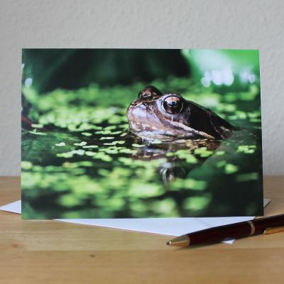 Common Frog A5 Blank Photographic Greetings Card