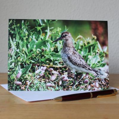 Dunlin Large A5 Blank Photographic Greetings Card