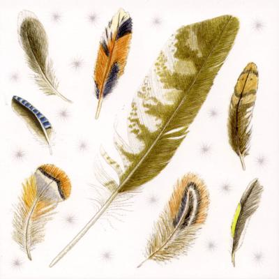 Birds Feathers Blank Greetings Card