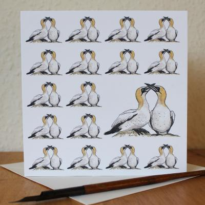 Gannets Blank Greetings Card