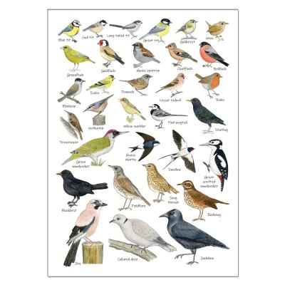 British Garden Birds A5 Identification Postcard