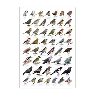 British Garden Birds Identification Poster