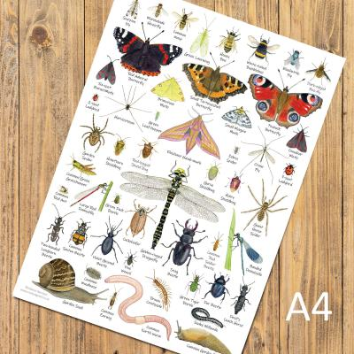British Garden Minibeasts A4 Identification Poster