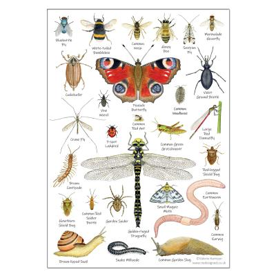 Garden Minibeasts Insects A5 Identification Postcard