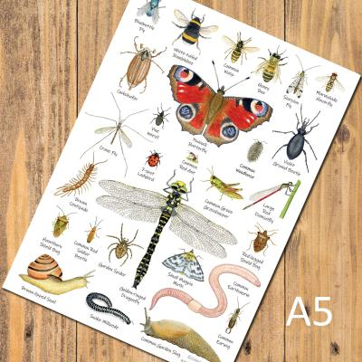 Garden Minibeasts Insects Invertebrates A5 Identification Postcard