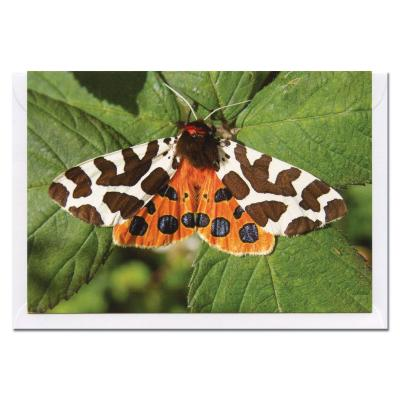 Garden Tiger Moth Blank Photographic Greetings Card A6
