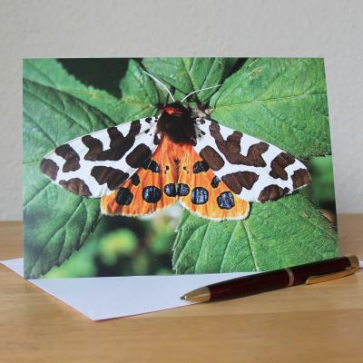 Garden Tiger Mothe Blank Photographic Greetings Card
