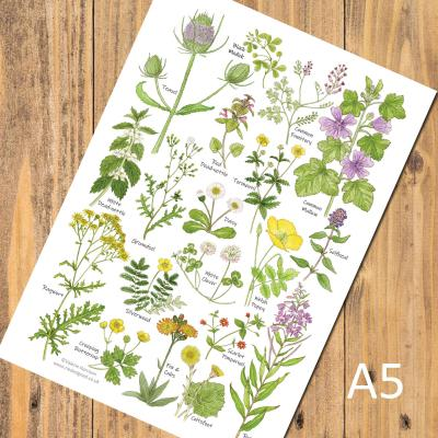 Grass and Wasteland Wild Flowers A5 Identification Postcard