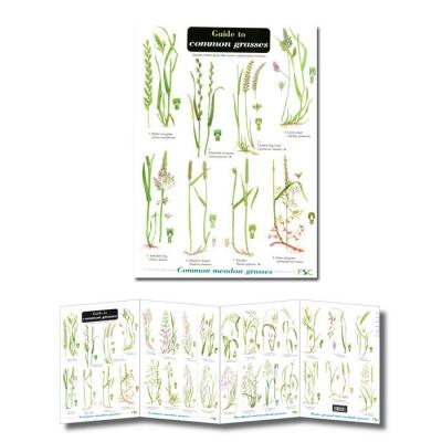 Foldout Laminated Guide to Common Grasses