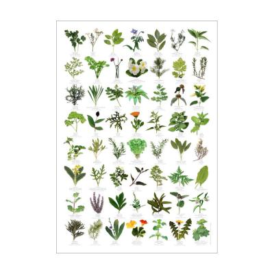 Herb Identification Poster
