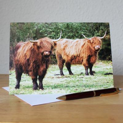 Highland Cattle Blank Photographic Greetings Card
