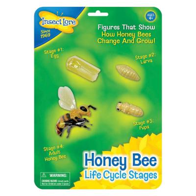 Honey Bee Lifecycle Figures
