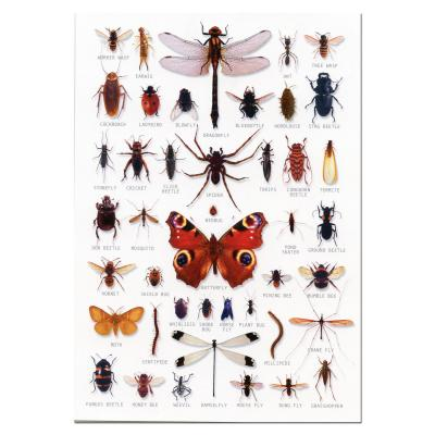 Insects Identification A5 Postcard