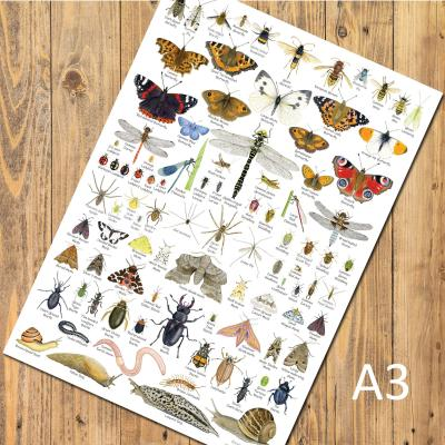 British Invertebrates Insects A3 Identification Poster