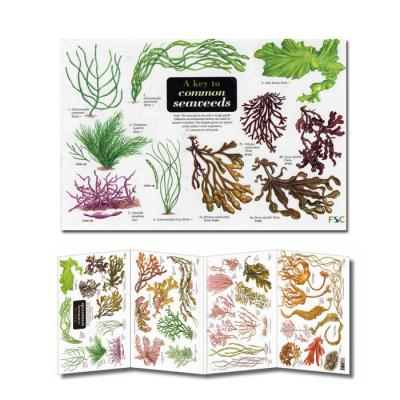Fold-out Laminated Guide A Key To Common Seaweeds