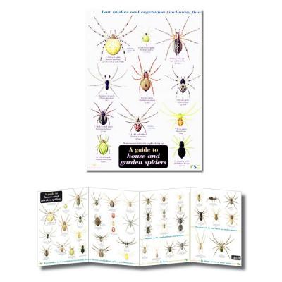 Fold-out Laminated Guide House and Garden Spiders
