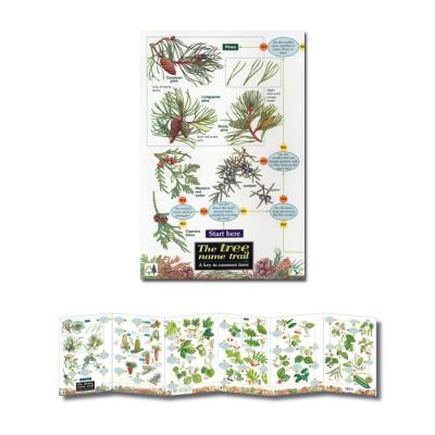 Fold-out Laminated Guide The Tree Name Trail