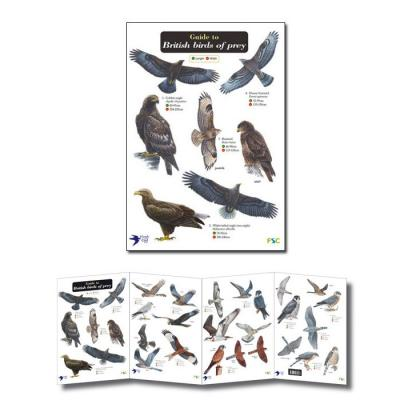 Laminated Guide to Birds of Prey