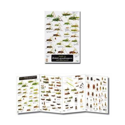 Fold-out Laminated Guide to British Grasshoppers & Allied Insects